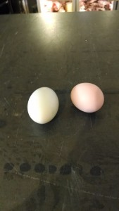 Two-eggs